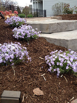 Landscape Contractor Schenectady, NY